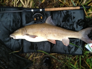 14lb 2oz barbel from the Kennet