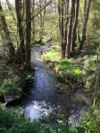 Trout stream through the woods