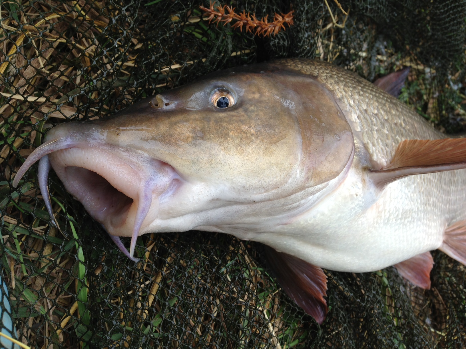 Reel tales of ghost carp, salmon, barbel and pike on the ...